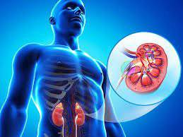 lavoro dei reni - addiotossine