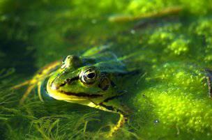 Non fare la fine della rana lessa! - addiotossine