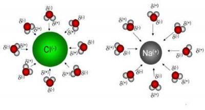 Ioni e connessioni neurolani.